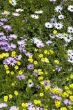 Dzikiego kwiatu pola z rocznik roślinami od ziaren Zdjęcie Royalty Free
