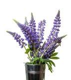 Dzikiego Lupine kwiaty Obraz Stock