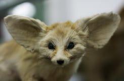 dzikiego szczura Zdjęcia Royalty Free