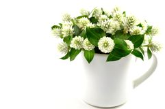 Dzikiej kuli ziemskiej wiecznotrwały kwiat Zdjęcia Royalty Free