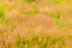 Dzikiej trawy bry Obrazy Stock