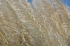 Dzikiej trawy kwiatu tekstura Zdjęcia Royalty Free