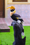 Dzioborożec ptak na karczu Obrazy Royalty Free
