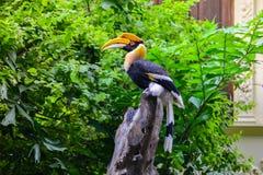 Dzioborożec ptak na karczu Obraz Royalty Free