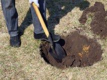 Dziura dla rośliny Obraz Royalty Free