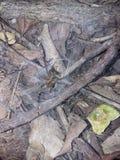 Dziura pająk zdjęcia stock