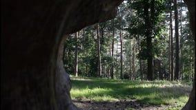 Dziura w bazie drzewo zbiory wideo