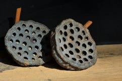 Dziury i ziarna wysuszony lotosowy owoc wzór Obraz Royalty Free