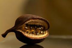 Dziwaczna owoc na stole Zdjęcie Royalty Free