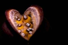 Dziwaczna owoc w zmroku Zdjęcie Royalty Free