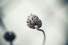 Dziwaczna puszysta roślina Obraz Royalty Free