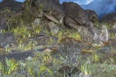 Dziwaczne antyczne skały plateau Roraima tepui - Wenezuela, Obrazy Royalty Free