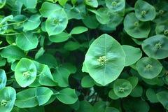 Dziwaczni zieleń kwiaty Obrazy Royalty Free