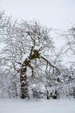 Dziwaczny dancingowy drzewo Zdjęcia Royalty Free