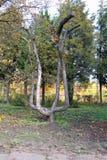 Dziwaczny drzewo Zdjęcie Royalty Free