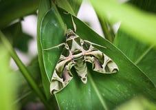 Dziwaczny motyl zdjęcie stock