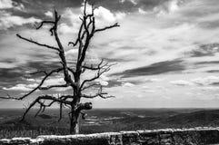 Dziwaczny nieżywy drzewo przy przegapiającym na linii horyzontu przejażdżce w Shenandoah parku narodowym Fotografia Royalty Free