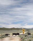 Dziwaczny ruchu drogowego skrzyżowanie Obraz Stock