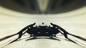 Dziwaczny skorpionu zbliżać się zbiory wideo