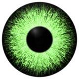 Dziwaczny zwierzęcy zielony oko z purpurowym barwionym irysem, szczegółu widok w oko żarówkę Fotografia Royalty Free