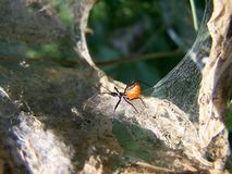 dziwne owadów Zdjęcia Royalty Free