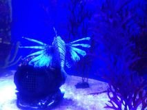 dziwne ryb Zdjęcie Stock
