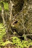 Dziwny drzewny bagażnik obraz stock