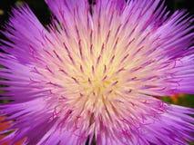 Dziwny purpura kwiat Obrazy Royalty Free