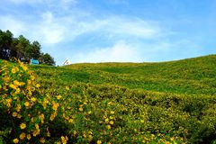Dzwoniący Bua Tong kwiat 001 Fotografia Stock