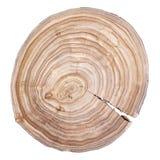 dzwoni drzewa fotografia stock