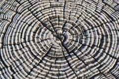dzwoni drzewa Zdjęcia Royalty Free