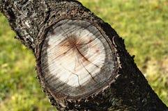 dzwoni drzewa Obrazy Stock