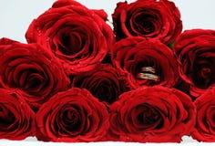 dzwoni róże Zdjęcia Royalty Free