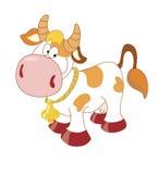 dzwonkowa krowa Zdjęcia Royalty Free