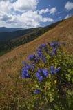 dzwonkowi kwiaty Obraz Royalty Free