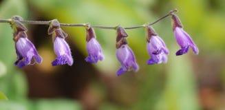 dzwonkowi kwiaty kształtują dzikiego Zdjęcia Stock