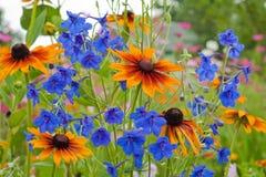 dzwonkowy błękit zakończenia kwiat dzwonkowy zdjęcia stock