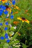 dzwonkowy błękit zakończenia kwiat dzwonkowy zdjęcia royalty free