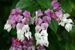 dzwonkowy kwiat Zdjęcia Royalty Free