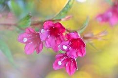 Dzwonkowy okwitnięcie Botanika, świeżość Makro- strzał dzwonkowy kwiat, niska głębia ostrość zdjęcie stock
