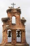 dzwonnica bociany gniazdowi hiszpańscy zdjęcie royalty free