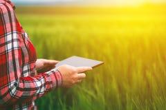 Żeńska średniorolna używa pastylka w pszenicznym uprawy polu Obraz Royalty Free