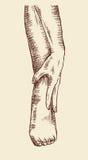 Żeńska ręka i noga Obraz Royalty Free