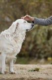 Żeńska ręka klepie psią głowę Fotografia Royalty Free