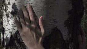 Żeńska ręka muska brzoza bagażnika zdjęcie wideo