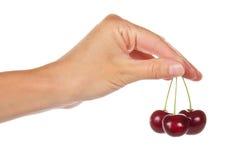 Żeńska ręka trzyma trzy słodkiej wiśni Fotografia Royalty Free