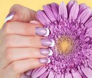 Żeńska ręka z francuskim manicure'em Zdjęcia Stock