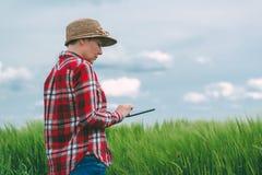 Żeński średniorolny używa pastylka komputer w pszenicznym uprawy polu Fotografia Royalty Free