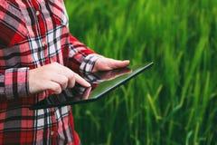 Żeński średniorolny używa pastylka komputer w pszenicznym uprawy polu fotografia stock