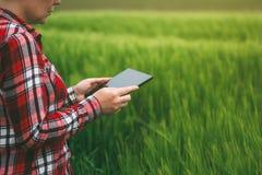 Żeński średniorolny używa pastylka komputer w pszenicznym uprawy polu Obrazy Royalty Free